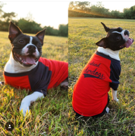 'Underdogs' on Red and Navy Doggie Baseball Tee (BOTH)